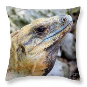 Iguana Of The Uxmal Pyramids In Yucatan Mexico Throw Pillow