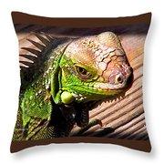 Iguana On The Deck At Mammacitas Throw Pillow