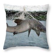 Illegal Gillnet Fishing Academy Bay Throw Pillow