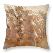 Illumination Series Sea Shells 11 Throw Pillow