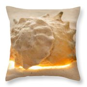 Illumination Series Sea Shells 17 Throw Pillow