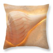 Illumination Series Sea Shells 19 Throw Pillow