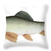 Illustration Of A Silver Redhorse Throw Pillow by Carlyn Iverson