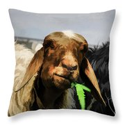 Illustration Of Sheep  Throw Pillow
