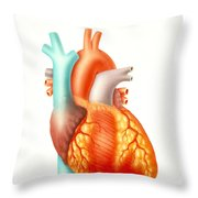 Illustration Of The Human Heart Throw Pillow