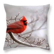 Img 2559-3 Throw Pillow
