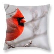 Img 2559-4 Throw Pillow