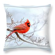 Img 2559-42 Throw Pillow