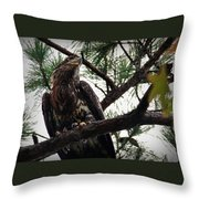 Immature American Bald Eagle Throw Pillow