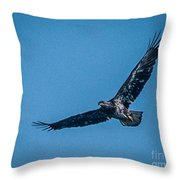 Immature Bald Eagle In Flight Throw Pillow