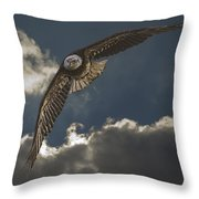 Immature Bald Eagle Throw Pillow