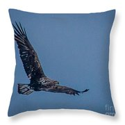 Immature Bald Eagle Throw Pillow