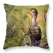Immature Cormorant Throw Pillow