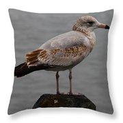 Immature Glaucous Gull Throw Pillow
