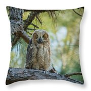 Immature Great Horned Owl Throw Pillow