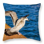 Immature Herring Gull At The Harbour Throw Pillow