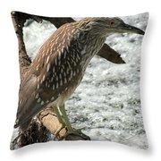 Immature Night Heron Throw Pillow