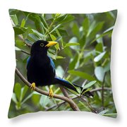 Immature Yucatan Jay Throw Pillow