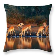 Impala Herd With Reflections In Water Throw Pillow
