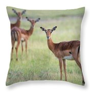 Impalas Aepyceros Melampus Petersi Throw Pillow