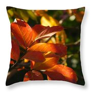 In A Golden Light 002 Throw Pillow