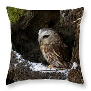 In Hiding Saw Whet Owl In A Hollow Stump Is Part Of The Birds Of Prey Fine Art Raptor Wildlife Photo Throw Pillow