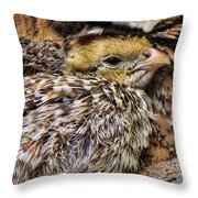 In Sheltered Love Throw Pillow