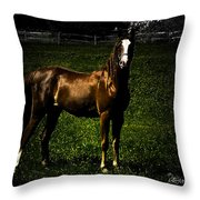 In The Corral 1 - Featured In Comfortable Art And Wildlife Groups Throw Pillow