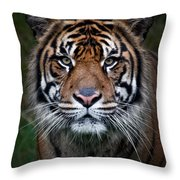 Tiger In Your Face Throw Pillow
