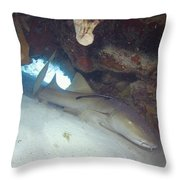 In The Dragon's Lair Throw Pillow