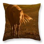 In The Golden Light Throw Pillow