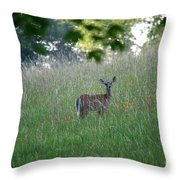 White-tailed Deer In Meadow  Throw Pillow