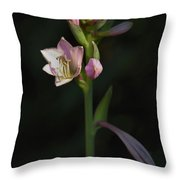 In The Shadows Of A Warm Summer Evening Throw Pillow