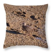 In The Stone Surf Gravel Cape May Nj Throw Pillow