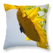 In The Wind - Sunflower Throw Pillow