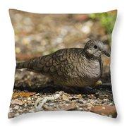 Inca Dove Throw Pillow
