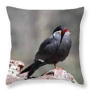 Inca Tern Throw Pillow
