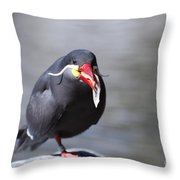 Inca Tern Eating Fish Throw Pillow