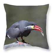 Inca Tern With A Fish Throw Pillow