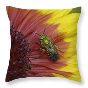 Indian Blanket And Bee Throw Pillow
