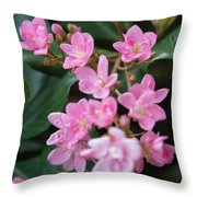 Indian Hawthorn Blossoms Throw Pillow