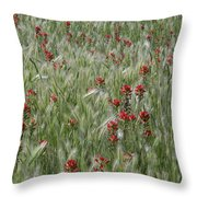 Indian Paintbrush And Foxtail Barley Throw Pillow
