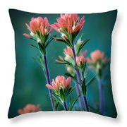 Indian Paintbrush At Dawn Throw Pillow by James Barber