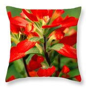 Indian Paintbrush I I Throw Pillow