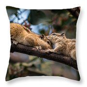 Indian Palm Squirrel Throw Pillow