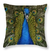 Indian Peafowl Male In Full Display Throw Pillow