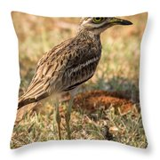 Indian Stone-curlew Or Indian Thick-knee Throw Pillow