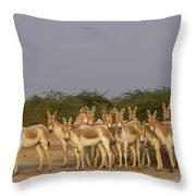 Indian Wild Ass Herd Gujarat India Throw Pillow