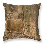 Indiana Buck  Throw Pillow