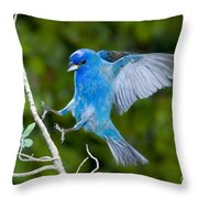 Indigo Bunting Alighting Throw Pillow